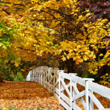 Hopping Off The Fence: Why Listing Your Home This Fall Is A Win!